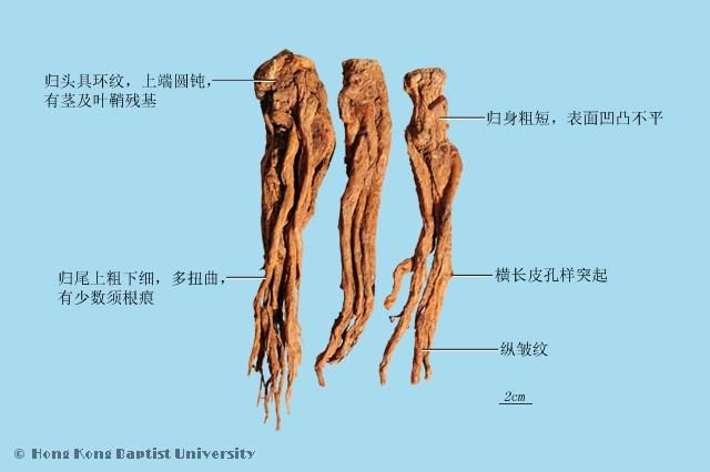木质部色较淡;根茎部分断面中心通常有髓和空腔